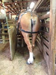 Amish Horses: Belgians At The Horse Sale Amish Horses April 2016 For Sale Featured Listings Kalona Homes For Property Search In Single Familyacreage Sale Iowa 20173679 Tours Chamber September 2014 Ia Horse Auction Pictures Of Amana Colonies Day Trip To Girl On The Go