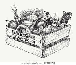 Wooden Crate Full Of Organic Food Isolated Farm Vegetables Word Written In