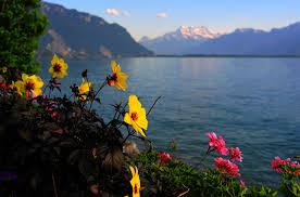 fleur et plante du lac fond d écran le coucher du soleil mer fleurs lac la nature