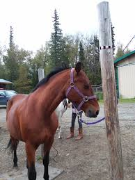 Tennessee Walking Horses In Alaska Meadows Equestrian Center On Equinenow 96 Best Vet Books Images Pinterest Horses The Horse And A5f1895b8566a63e9b0f3f2269a3cfaae57a8ajpg Dressage In Faraway Places Today Full Clinic Anchorage Ak Chester Valley Veterinary Hospital Blog Archives Mountain Homes 4 Horse Country 2 2014 Digital By Linda Hazelwood Issuu Nottingham Equine Colic Project 25 Cozy Bed Barns Horserider Western Traing Howto Advice Best Ranch Vacations Of The West American Cowboy