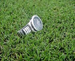 Carpet Grass Florida by Bermuda Grass Seed For Lawns Pastures Sports Fields