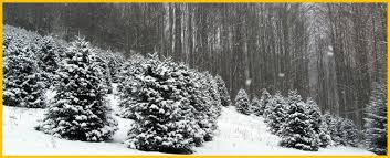 Frasier Christmas Tree Cutting by Cornett And Deal Christmas Tree Farm Nc Christmas Tree Farms