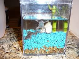 Should African Dwarf Frogs Shed by Will 5 Neon Tetra Fish And 2 African Dwarf Frogs Be Good To Live