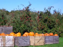 Apple Pumpkin Picking Syracuse Ny by Empire State Farming Ontario Orchards The Farm Stand With