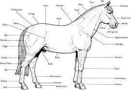 Coloring Pages Free Dinosaur Realistic Foal Rearing Horse Page Printable