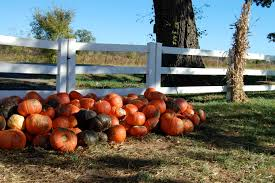 Pumpkin Patches In Oklahoma by Herding Crickets Autumn And A Pumpkin Patch