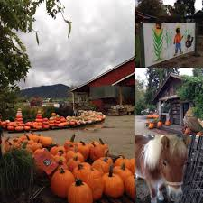Pumpkin Patch Rides by Top 4 Pumpkin Patches In The Rogue Valley Medford Central