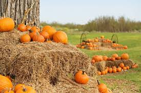 Pumpkin Patch Austin Tx 2015 by The Best Pumpkin Patches In Texas The Brilliant Balance