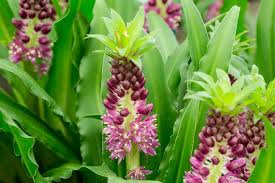 summer flowering bulbs for august gardenersworld