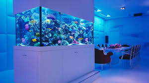 Aquarium Fish Ideas 2017 - Creative Home Design Fish Tank And ... Amazing Aquarium Designs For Your Comfortable Home Interior Plan 20 Design Ideas For House Goadesigncom Beautiful And Awesome Aquariums Cuisine Small See Here Styfisher Best Stands Something Other Than Wood Archive How To In Photo Good Depot Kitchen Cabinet Sale 12 To Home Aquarium Custom Bespoke Designer Fish Tanks Perfect Modern Living Room Lighting 69 On Great Remodeling Office 83 Design Simple Trending Colors X12 Tiles Bathroom 90