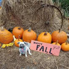 Pumpkin Patch Lafayette La 2017 by Plum Street Snoballs Home Facebook