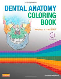 Dental Anatomy Coloring Book E Free Download With Essentials Of