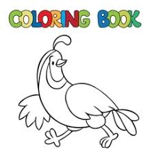 Coloring Book Of Little Quail Vector