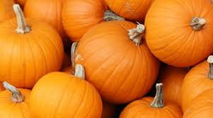 Pumpkin Patch Near Nolensville Tn by Where To Pick Pumpkins In Williamson County Williamson Source
