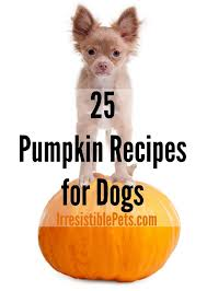 Using Pumpkin For Dog Constipation by Irresistible Pumpkin Recipes For Dogs Irresistible Pets