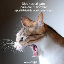 Image 24 Of 50 Lecturas Silenciosas La Msica Del