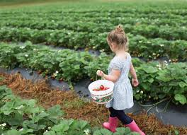 Best Pumpkin Patch Lancaster Pa by Outdoor Activities Capitol Momma