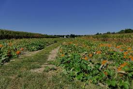 Pumpkin Picking Nj 2015 by Don U0027t Miss These 12 Great Pumpkin Patches In New Jersey This Fall