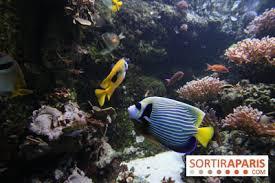 sauvages aquarium porte doree