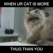 thug cat thug cat or downvids net