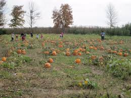 Lodi Pumpkin Patch by Pleasant View Orch Pleasantvieworc Twitter