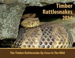 rattlesnake education and awareness aging rattlesnakes don t