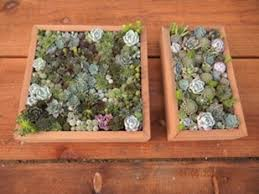 Handmade Redwood Frames From Succulent Gardens Living Picture Kits Photo
