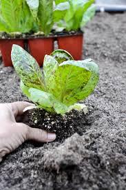 Preparing your California garden for Fall planting