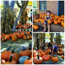 Irvine Great Park Pumpkin Patch by 3 Reasons The Irvine Park Railroad Pumpkin Patch Is The Best