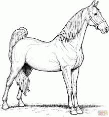 Horse Coloring Page Printable Pages Free Picture