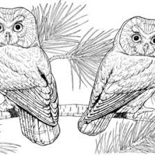 Printable Difficult Coloring Pages AZ