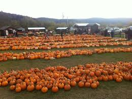 Pumpkin Patch Toledo Ohio by 10 Charming Pumpkin Patches In Iowa That Are Perfect For Fall