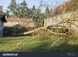 Storm Cyclone Tree Elm Orme Fall Stock Photo 567465574 - Shutterstock This Is An Oil Pating Of Old Thouse Done On Canvas With Elm Tree Barn Self Catering Holiday Let Around Guides Northampton Ma Real Estate Goggins Two It Yourself Diy West Burlap Christmas Knockoff 4235 Lane Allegan Mi 49010 Mls 17015368 Jaqua A Pottery With All The Trimmings View Ref 29687 In Freethorpe Norfolk Fimber Driffield Sfcateringtravel Quilts Sauk Prairie Area Chamber Commerce Wi Celebrating Cedar Ulmus Crassifolia