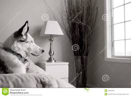 hund im schlafzimmer stockbild bild lü schlafzimmer