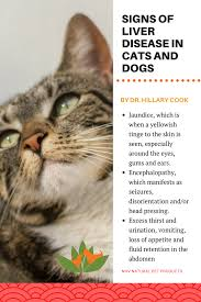 fatty liver cats vet talk liver disease in dogs and cats is your pet at risk
