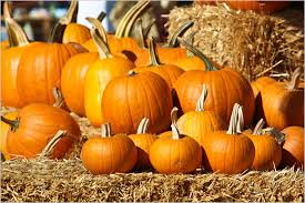 Kent Ohio Pumpkin Patches by Literally Just 13 Adorable Pictures Of Pumpkins Her Campus