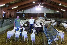 chambre d agriculture lozere produire du lait de chèvre bio