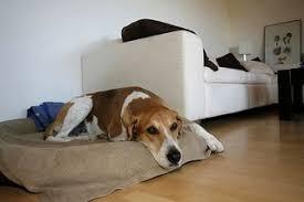 effektive mikroorganismen für hund katze die tierexperten