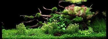 lots de plantes d aquarium intermédiaire paysage aquatique n 78