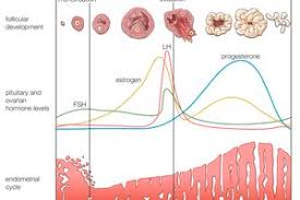 Thick Uterine Lining Shedding During Period by Menstruation Information And Advice
