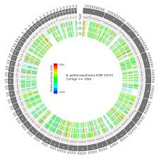 A Genomic Perspective On A New Bacterial Genus And Species From The