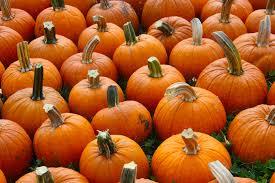 Eastern Iowa Pumpkin Patches pumpkins iowa on the go