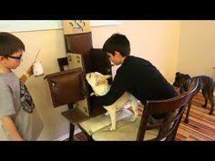 Bailey Chair Megaesophagus Instructions by Megaesophagus Mick 5 Mpg Youtube Megae Pinterest