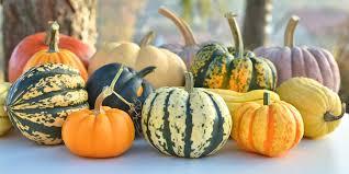 Varieties Of Pie Pumpkins by A Visual Guide To Winter Squash Varieties Epicurious Com