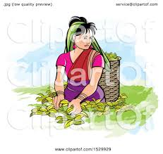 Clipart Of A Sri Lankan Woman Plucking Tea Leaves
