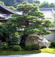 Pine Tree Garden – exhort