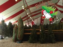 Pinecrest Christmas Tree Farm by Www Christmastreesfl Com Christmas Trees Miami