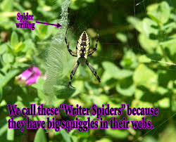 Arachnaphilia – Spiders In My Yard! | Shibumo R2rustys Chatter September 2017 Ladybugs Backyard And Beyond Birdingand Nature Golden Silk Orb Weaver Spider In Bug Eric Sunday Black Yellow Argiope Glass Beetle By Falk Bauer A Backyard Naturalistinsects Ghost Spiders Family Anyphnidae Spidersrule C2c_wiki_silvgarnspider_hrw8q0m1465244105jpg Aurantia Wikipedia Two Views Sonoran Images Elephant Tiger Skin Spiny Blackandyellow Garden Mdc Discover Power Animal For October Shaman Amy Katz