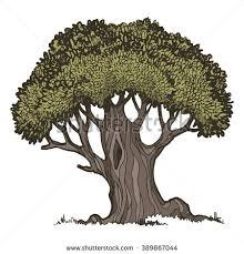 Old oak tree color vector illustration on a white background
