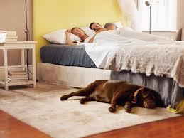 darum können sie hunde ruhig im schlafzimmer übernachten